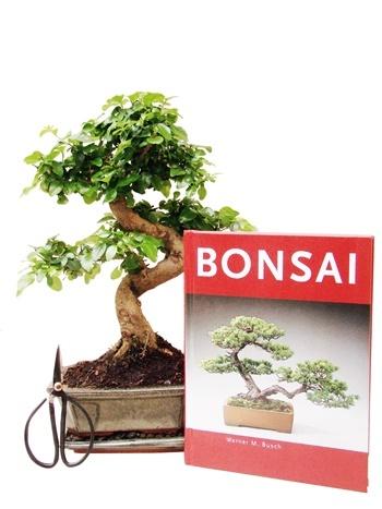 Genki bonsai ihr bonsai fachhandel f r bonsai b ume und for Bonsai versand